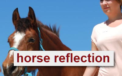 Horse Reflection